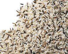 Wild Rice IQF mix from Bowlander